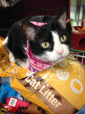 Ivy the cat is looking for a home for the New Year.