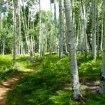 Discover Flagstaff: Aspens, cheese crisps and Route 66
