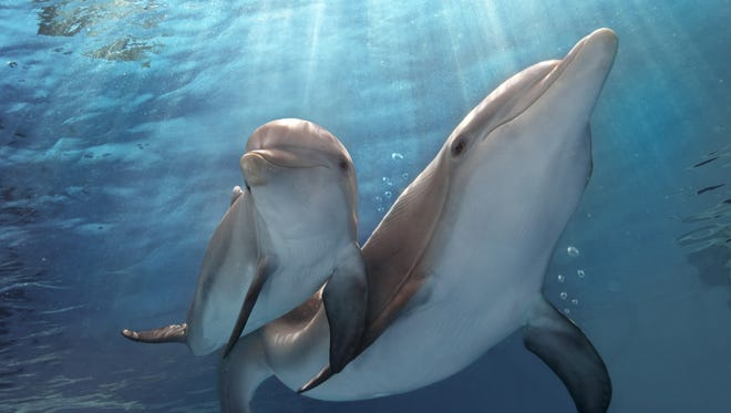 "This scene is from the film ""Dolphin Tale 2."""