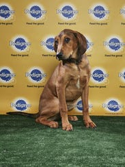 Barry from Nashville Humane Association will be in