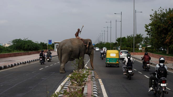 An Indian mahout gestures to stop traffic as he crosses a highway to take a domesticated elephant for a river bath  in New Delhi, India.