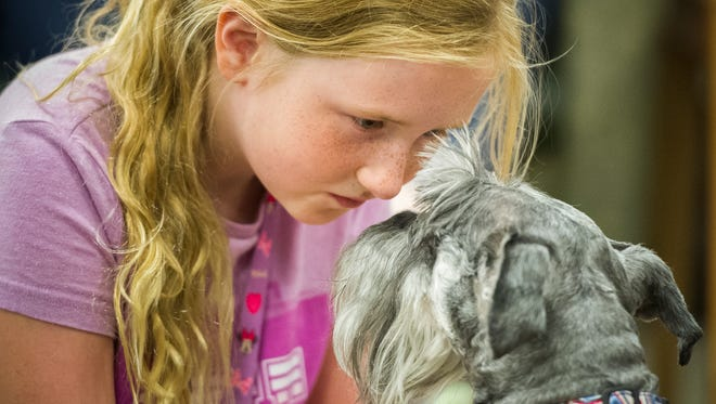 Madison Schmitz, 9, of Evansville, plays with Ranger,  four-year-old miniature schnauzer, during the Paws for Tales event at the Oaklyn branch of the Evansville Vanderburgh Public Library, Wednesday, Aug. 31, 2016. The event is free and takes place every Wednesday at 3:30 p.m. at the Oaklyn Branch.