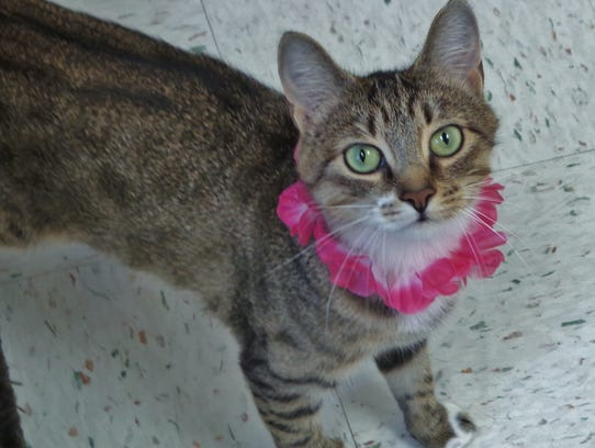 Paprika is one gorgeous girl. She's a 1-year-old brown