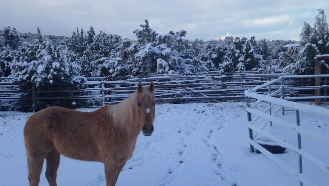 A horse stands in snow-covered Dammeron Valley north of St. George on Friday, Jan. 8, 2016.
