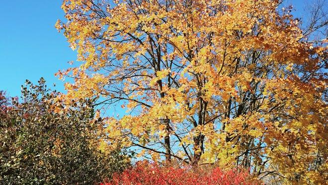 #red #green #yellow #blue #fall #leaves #painelake #newrochelle #thomaspaine #lohud