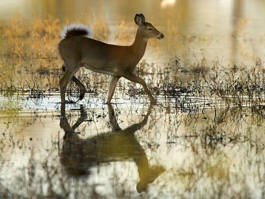 Whitetailed_deer