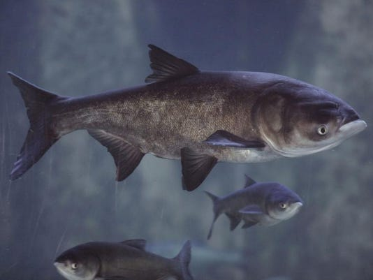 Great Lakes Asian Carp.jpg