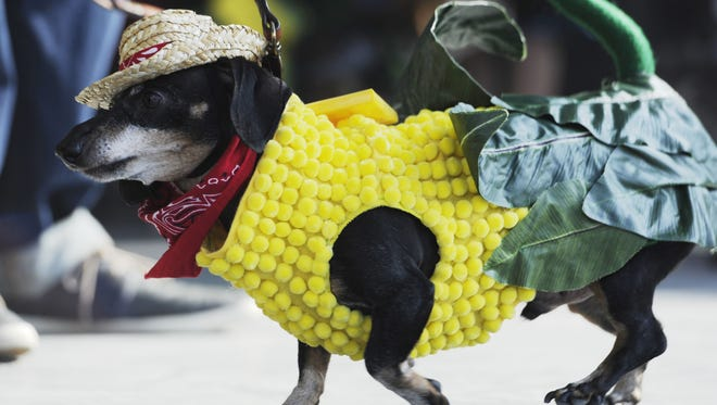 Pets can enter the Pup Strut Costume Contest in Gallatin's new Pawpalooza Pet Festival.
