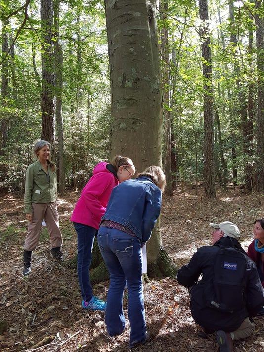 pw tree tour 1