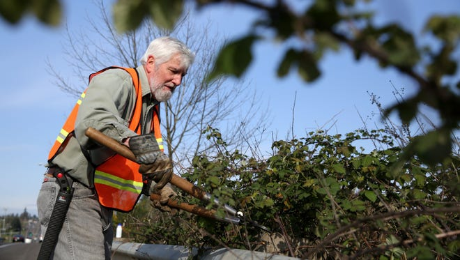 Dan Schie cuts blackberry bushes and Scotch Broom along Keubler Boulevard near Turner Road on Friday, April 3, 2015 in Salem, Ore. A group of community volunteers has been clearing the shrubs from blocking the bicycle lanes for the past seven years.