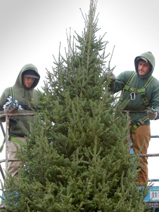 where to find live christmas trees in the north shore
