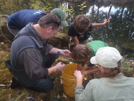 Fish and Wildlife, with the assistance of the U.S. Forest Service, members of the the Coast Fork Watershed Council and student volunteers, helped in the sampling effort to see how far ringed crayfish have spread in the Willamette Drainage.
