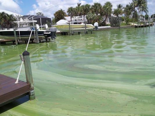 636323514990055855-0626-TCLO-opinion-algae2.JPG
