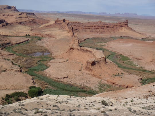 Tamarisk trees now occupy riverbeds across the Southwest,
