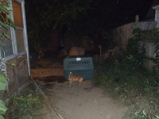 A small dog barks in the yard of the rear residence