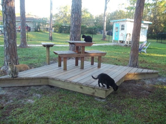 The cats inspect the construction work on the deck built by Boy Scouts.