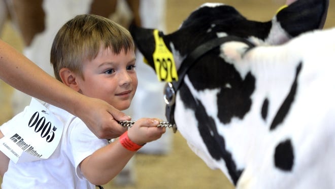 The real stars of the Brown County Fair each year are the 4H kids and their projects on display Saturday, August 21, 2015. In the Kiddie Showmanship contest for the youngest kids, Jules Cappelle, 5, of Greenleaf gets a bit of help from the judge when his cow gets restless during the judging.