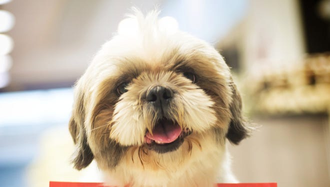 The Centers for Disease Control and Prevention linked 39 cases of campylobacter infections to Petland puppies.