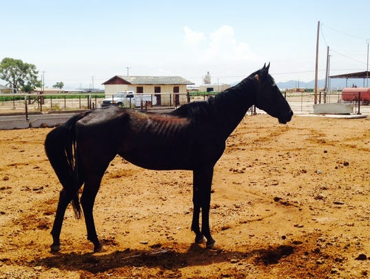 Horses photo 1 (3)