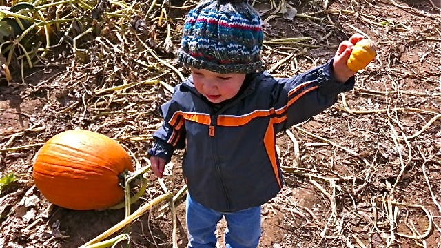 "John Schneider's grandson, Colin Schneider, expresses his preference for the ""tiny one"" while  at a pumpkin patch."