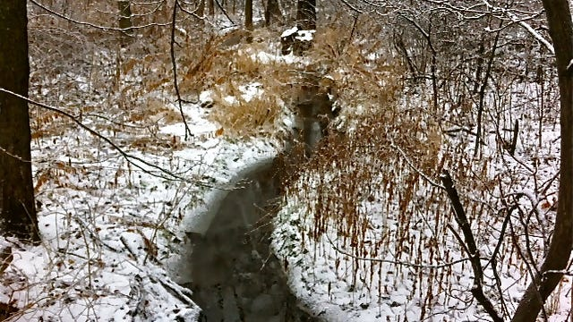 A winter walk out in the woods for a few hours is a nice change from being cooped up inside.