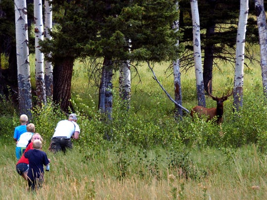 Yellowstone National Park tourist John Gleason moves in on a large bull elk as two of his children and two children of friends follow.