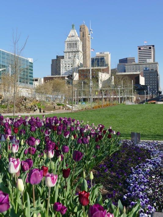 636560291657698652-skyline-tulips.jpg