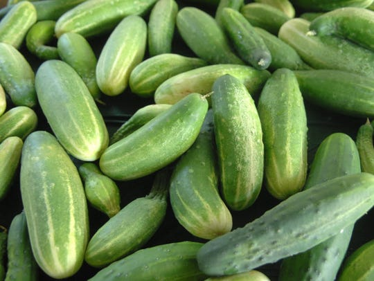 Cucumbers would be one of the vegetables grown at the