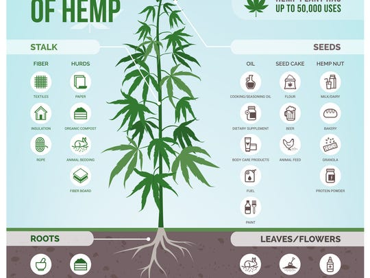 An infographic showing the many uses of hemp.
