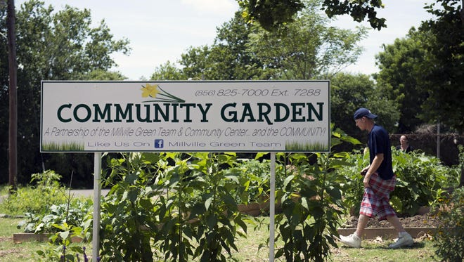 Locals pick fresh vegetables from the community garden next to the Millville library Friday.