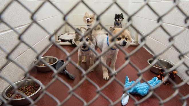 A kennel full of dogs seized in Eden in their kennel at the Humane Society of Wicomico County on Wednesday, April 27, 2016.