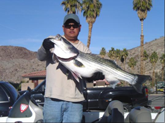 Stripers biting in davis dam lake mohave for Lake mohave fishing