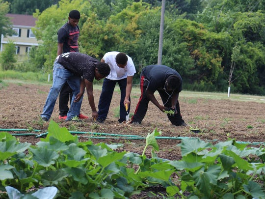 A group of students from Vincent High School plant young lettuce plants in the school's garden on Aug. 9.