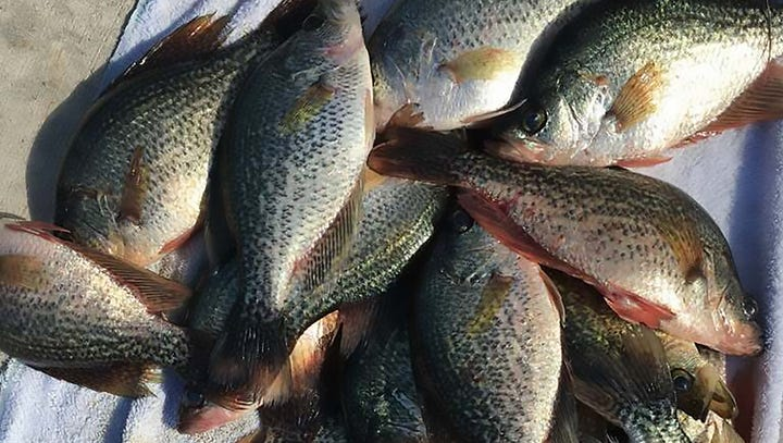 Are the fish in Florida's waters polluted with toxic algae safe to eat?