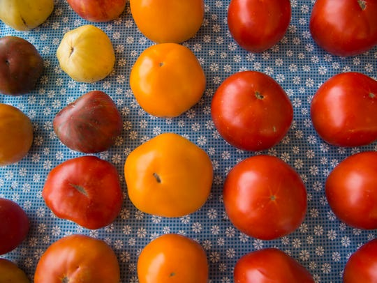 Colorful tomatoes in shades of red and orange are displayed