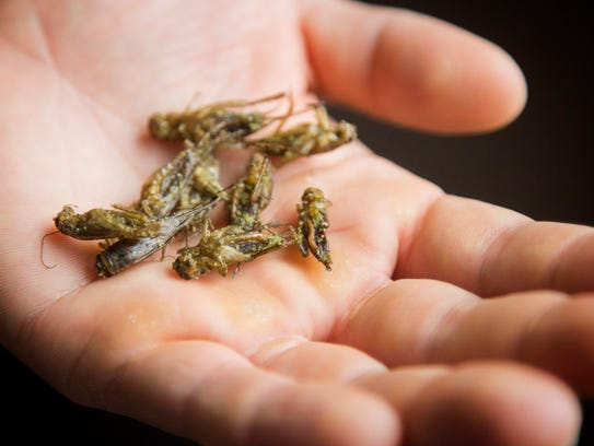 Shelby Smith, Owner of Gym-N-Eat Crickets holds dry