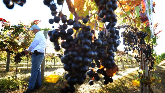 Harvest Ridge Winery in Marydel