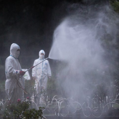 Dengue fever hits Japan for first time in decades