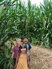 Kids at Eliada's annual corn maze, which opens on Sept. 14 this year.