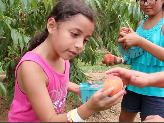 Jerusalem Ramirez, left, of Spring Valley, N.Y., shows her mother, Yanali, a fresh-picked peach at Alstede Farms in Chester.
