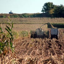 Farmers work to bring the harvest in before frequent and heavy rains hit last week and ended progress.