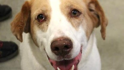 Claire is available from the Licking County Humane Society.