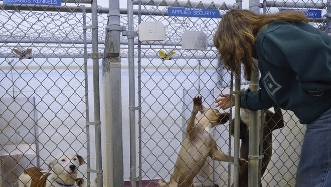 Humane Society of Elmore County Executive Director Rea Cord greets some of the dogs at the shelter in Wetumpka, Ala..