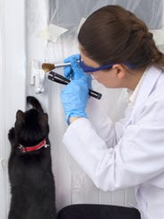 Another cat shows its skills at a crime scene as an
