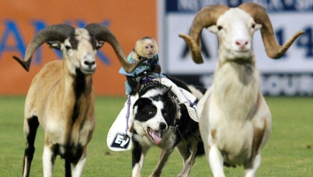 "The ""Cowboy Monkey Rodeo"" will not appear at PeoplesBank Park in York during the 2017 Revolution season."