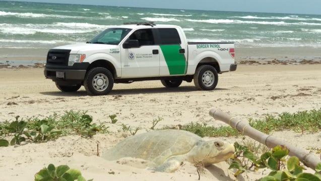 A Border Patrol truck at the Padre Island National Seashore.
