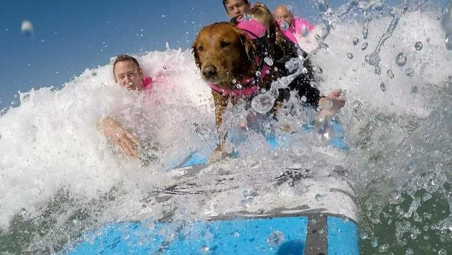 Ricochet failed in service training to become an awesome surfer instead.