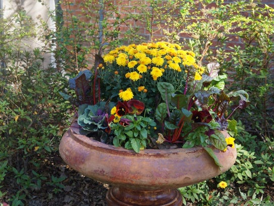 Container plants should be deadheaded, replaced or