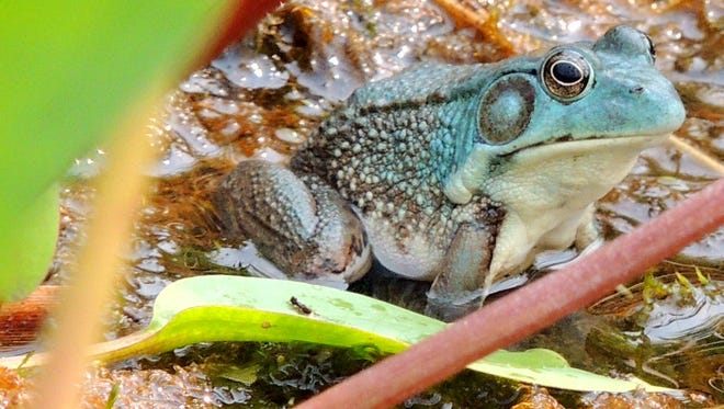 An encounter with an extremely rare blue frog helped to make 2015 an exciting year for exploring nature.