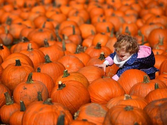 -pumpkins-10-jpg.JPG_20170901.jpg